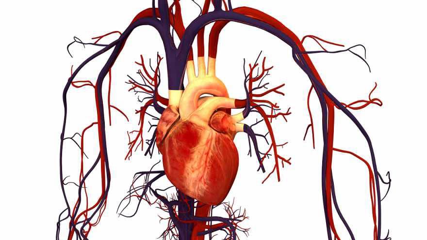 قلب و عروق تلگرام علت نارسایی قلبی چیست؟ - دکتر محمد حسین نجفی