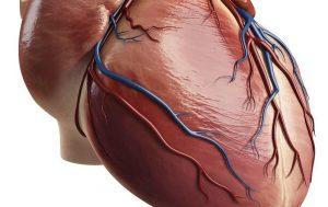 عضلات قلب