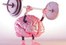 ورزش برای مغز