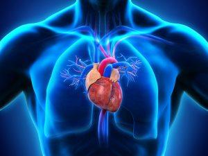 رگ های قلب